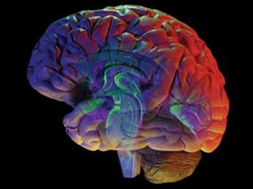 cerebro-2
